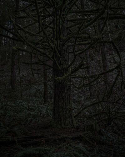 Chris Bennett, 'From the series Darkwood, #23', 2014