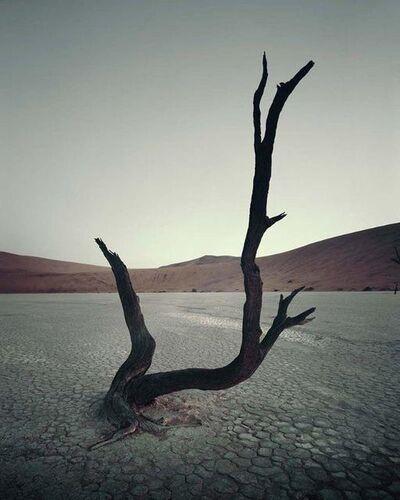 Jimmy Nelson, 'IV 470 - Dead Vlei, Sossusvlei Namibia', 2011