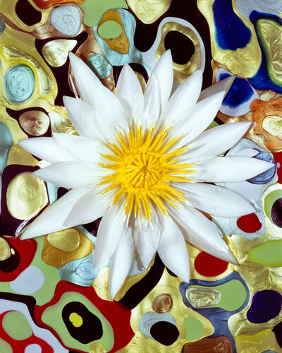 Christopher Beane, 'White & Gold Water Lily in Nail Polish Pools', 2010