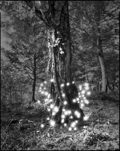 Tokihiro Sato, 'Photo Respiration Trees Shirakami #2', 2008