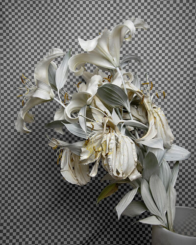 Stephanie Syjuco, 'Whiteout (Krylon ColorMaster Gloss White on White Oriental Lilies)', 2019