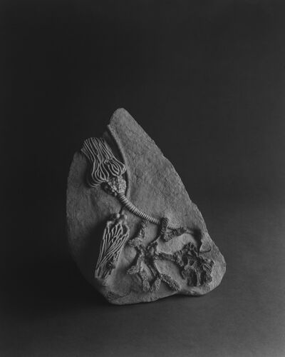 Hiroshi Sugimoto, 'Limited Edition of Cahiers d'Art 1, 2014 - French Edition', 2014