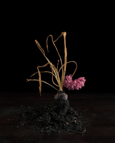 Brigitte Lustenberger, 'Flowers IX', 2014