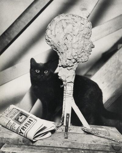 André Kertész, 'Cat, Paris.', 1970s