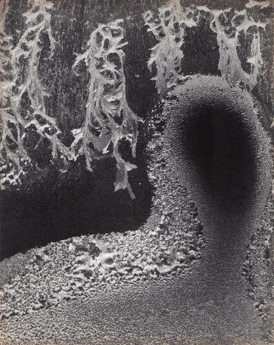 Minor White, 'Empty Head', Neg. date: 1962