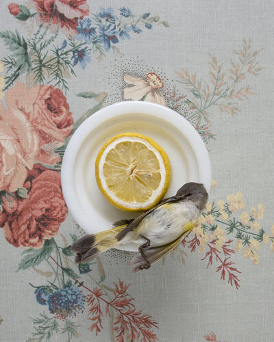 Kimberly Witham, 'Still Life with Warbler and Lemon', 2010
