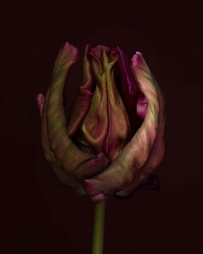 Ron van Dongen, 'Rembrandt Still Lives #61'