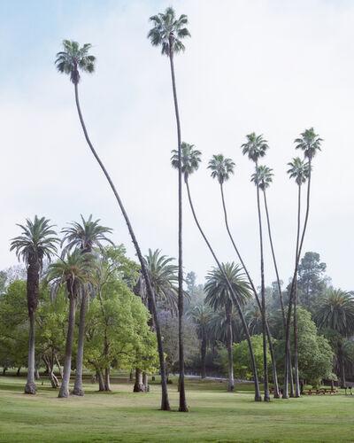 Marie-José Jongerius, 'Los Angeles Palms (Elysian Park)', 2017