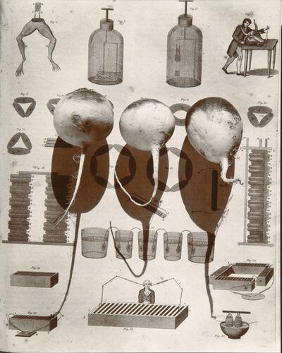 "Olivia Parker, 'Galvanization (from ""Lost Objects portfolio)', 1980c"