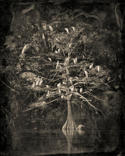 Keith Carter, 'Nesting Tree Study #1', 2012