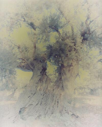 Ori Gersht, 'Olive 1', 2003