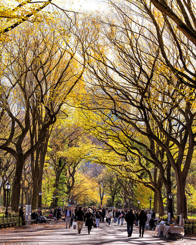 Andrew Prokos, 'Poet's Walk in Autumn, Central Park', 2017