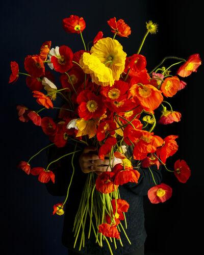 Cig Harvey, 'Poppies Explosion', 2020