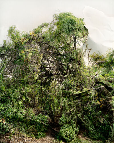 Laura Plageman, 'Response to Shrub with Doves', 2006