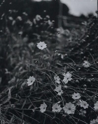 Huang Rui, 'Kyoto 8', 2000
