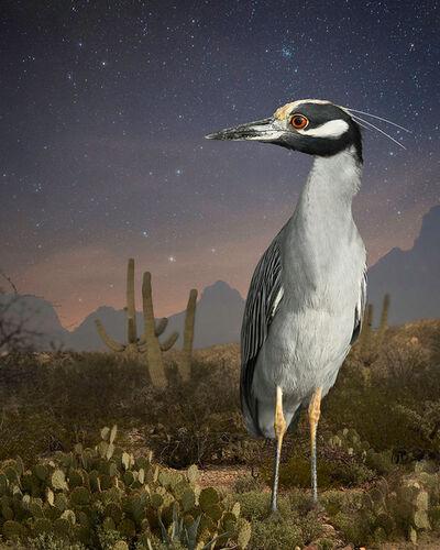 Cheryl Medow, 'Night Heron in Tucson', 2015