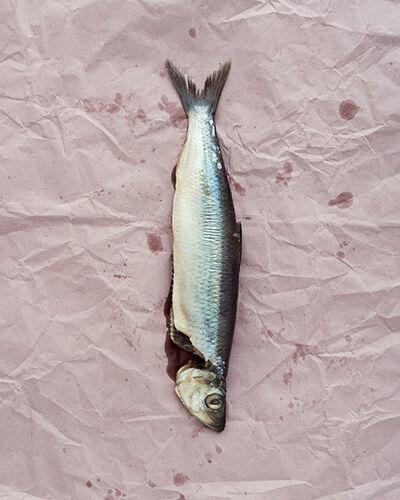 Claus Goedicke, 'Fisch', 2014
