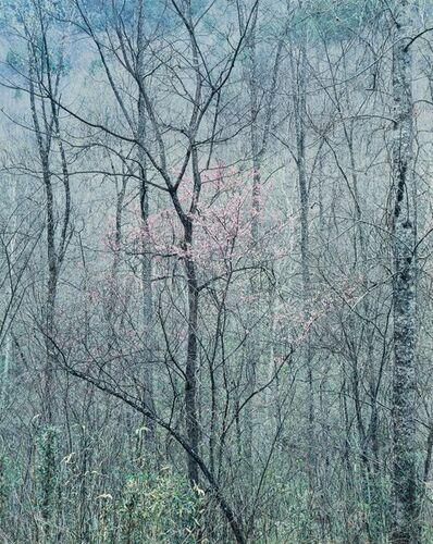 Eliot Porter, 'Redbud Trees in Bottom Land, Red River Gorge, Kentucky', 1968-1979