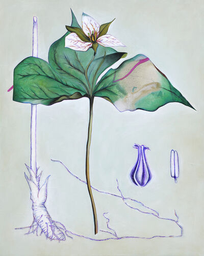 Fiona Ackerman, 'Death Flower Birth Root', 2019