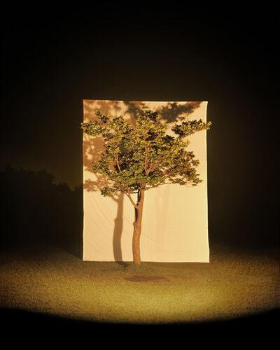 Lee Myoung Ho, 'Tree #4', 2005