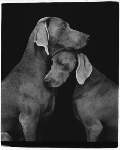 William Wegman, 'Friends', 2010