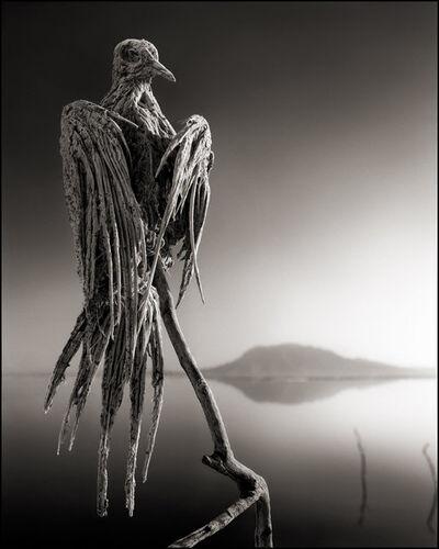 Nick Brandt, 'Petrified Dove, Lake Natron', 2010