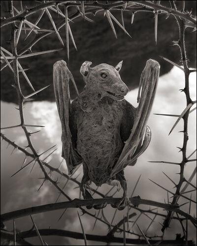 Nick Brandt, 'Petrified Bat II, Lake Natron', 2012