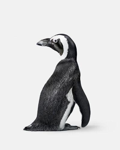 Randal Ford, 'Penguin No. 2', 2018