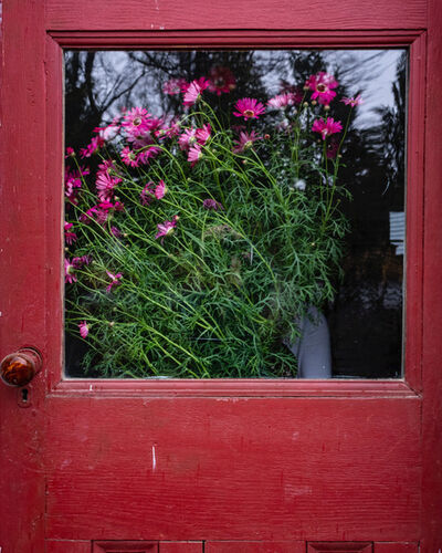 Cig Harvey, 'Red Door and Pink Daises', 2020