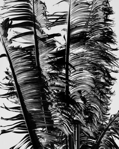Matthew Porter, 'Shredded Palms', 2020