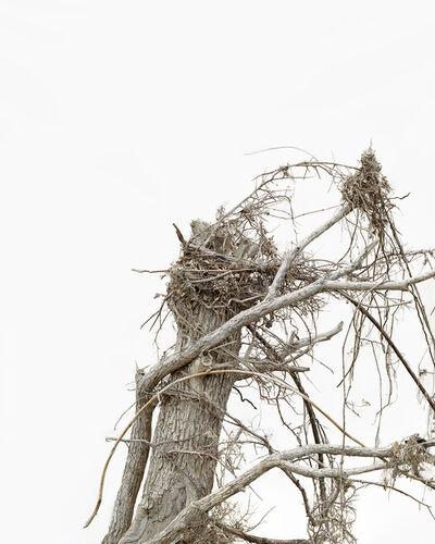 Anna Collette, 'Gathering Ground #42', 2014
