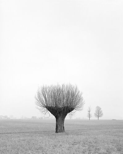 Paola De Pietri, 'Untitled 016, Questa Pianura series', 2015