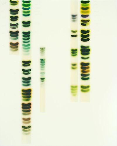 Jaq Chartier, 'Full Spectrum - Green', 2016
