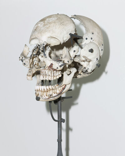 André Penteado, 'Skull used for anatomical studies. Dom João VI Museum (French Mission series)', 2017