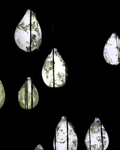 Joseph Sivilli, 'Vidalen Terrarium  ', 2019