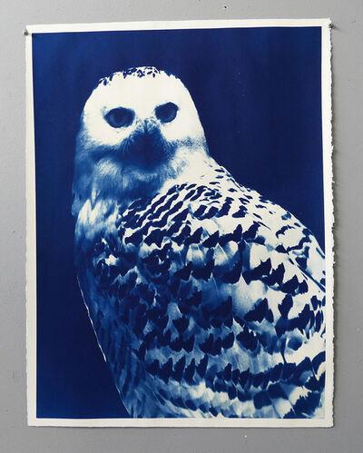 Mariano Chavez, 'Owl', 2019