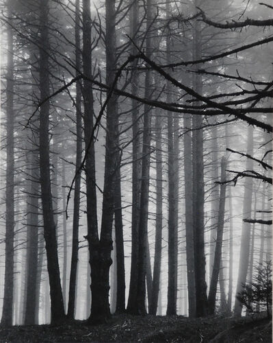 Eliot Porter, 'Spruce Trees in Fog, Great Spruce Head Island, Maine (Fog, Maine Woods)', 1954