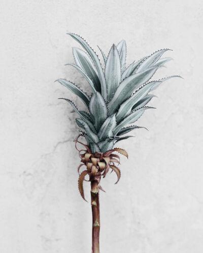 Vee Speers, 'Botanica #10', 2016