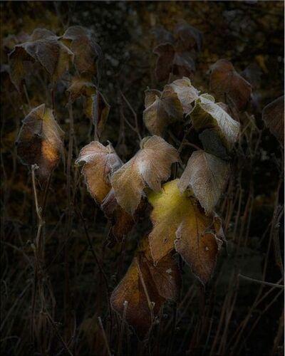 Nicolas Dhervillers, 'Still Life', 2013-2015