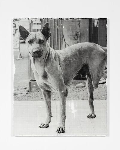 Jason Deary, 'The Dog', 2021