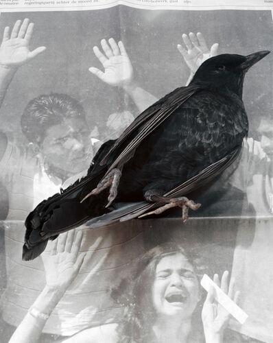 Geert Goiris, 'Dead Bird', 2008