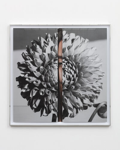 Kathryn Andrews, 'Hollywood Dahlia', 19.011