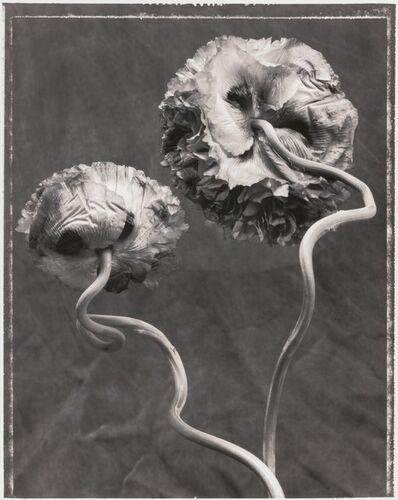 Ron van Dongen, 'Papaver Somniferum', 1996