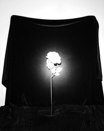 Marissa Long, 'Luminiferous Aether (flower)', 2016