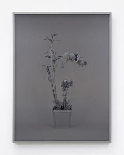 Stephanie Syjuco, 'Neutral Orchids (Phalaenopis + Dracaena sanderana 2)', 2016