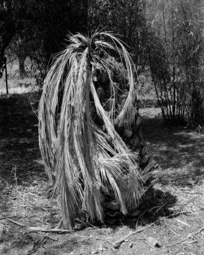 Nuno Barroso, 'Palm Tree', 2018