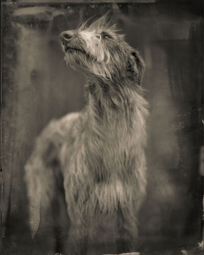 Keith Carter, 'BogDog'