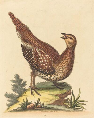 George Edwards, 'Brown Speckled Bird'