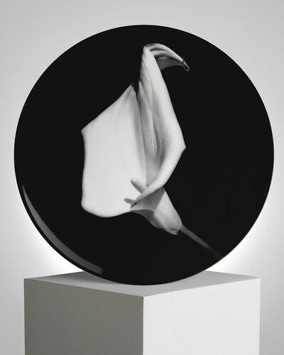 Robert Mapplethorpe, 'Small Calla Lily', ca. 2019