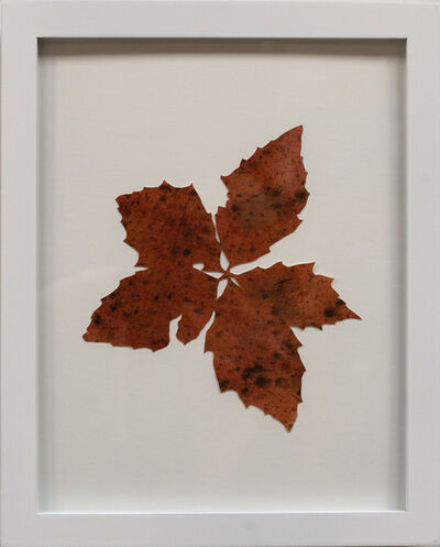 Hannah Cole, 'Untitled Red Weed', 2018